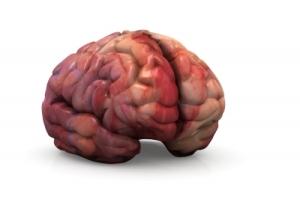 ugly brain