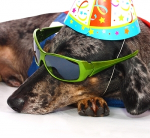 dog partied out